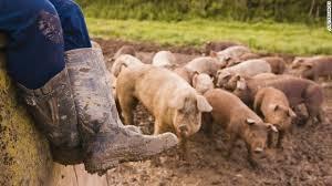 muddy boots barnyard (300x168)